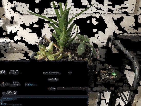 slackplant